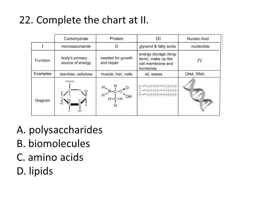 22. Complete the chart at II. A. polysaccharides B. biomolecules C. amino acids D. lipids
