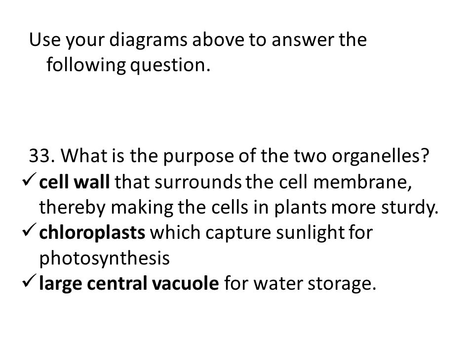 Use your diagrams above to answer the following question. 33. What is the purpose of the two organelles? cell wall that surrounds the cell membrane, t