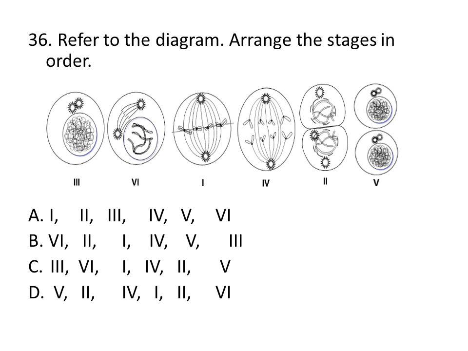 36. Refer to the diagram. Arrange the stages in order. A. I, II, III, IV, V, VI B. VI, II, I, IV, V, III C. III, VI, I, IV, II, V D. V, II, IV, I, II,