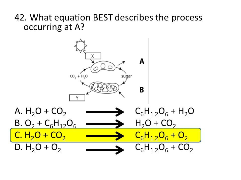 42. What equation BEST describes the process occurring at A? A. H 2 O + CO 2 C 6 H 1 2 O 6 + H 2 O B. O 2 + C 6 H 12 O 6 H 2 O + CO 2 C. H 2 O + CO 2