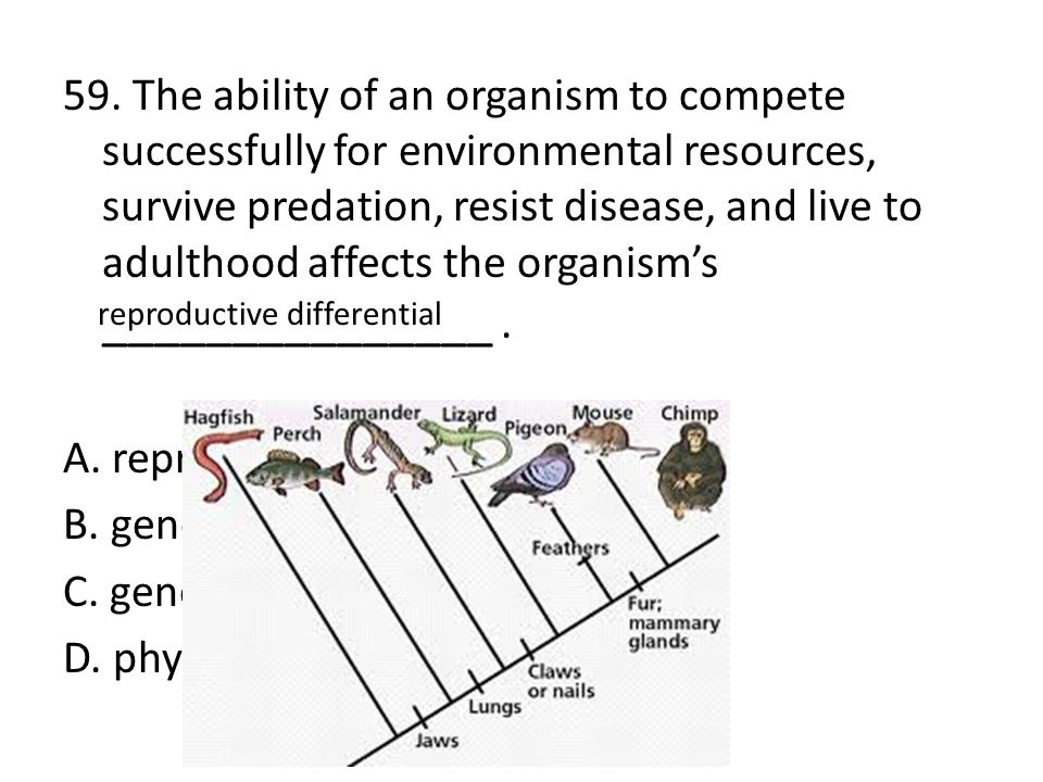 59. The ability of an organism to compete successfully for environmental resources, survive predation, resist disease, and live to adulthood affects t