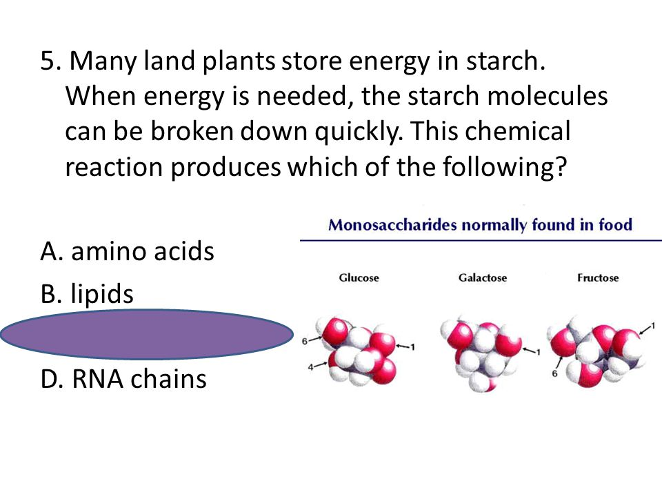 5. Many land plants store energy in starch. When energy is needed, the starch molecules can be broken down quickly. This chemical reaction produces wh
