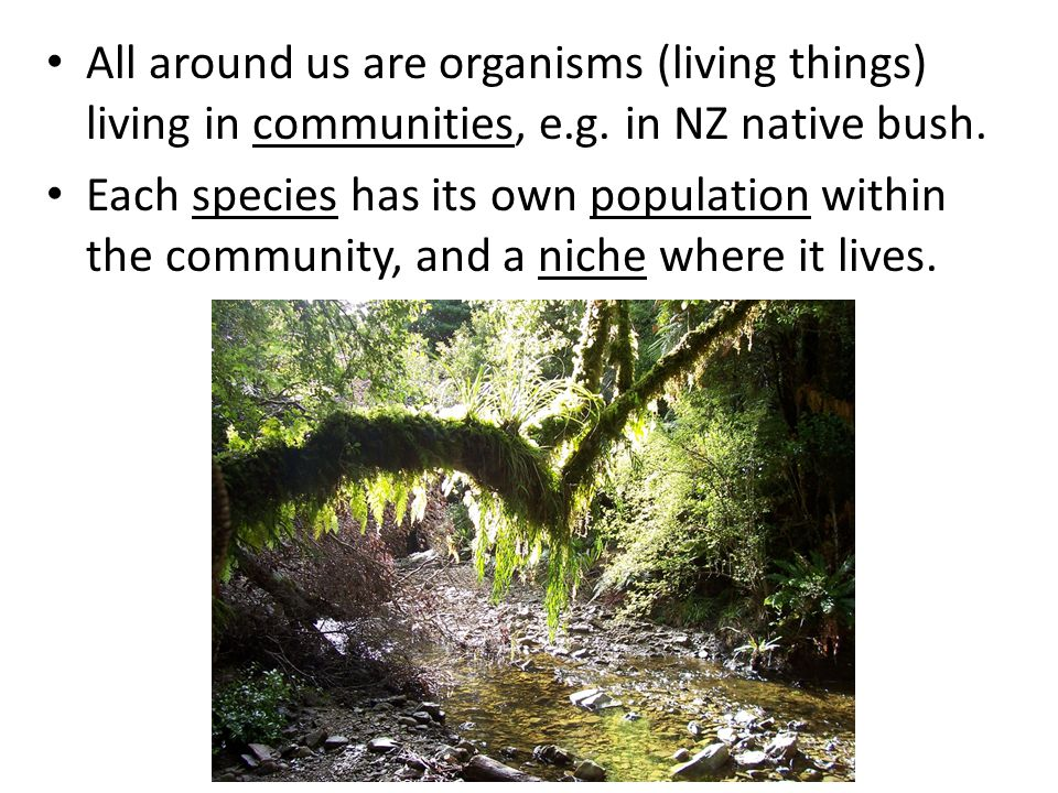 All around us are organisms (living things) living in communities, e.g. in NZ native bush. Each species has its own population within the community, a