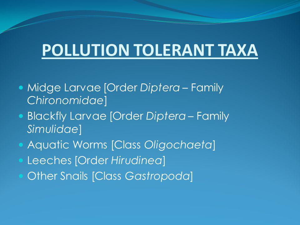 POLLUTION TOLERANT TAXA Midge Larvae [Order Diptera – Family Chironomidae] Blackfly Larvae [Order Diptera – Family Simulidae] Aquatic Worms [Class Oli