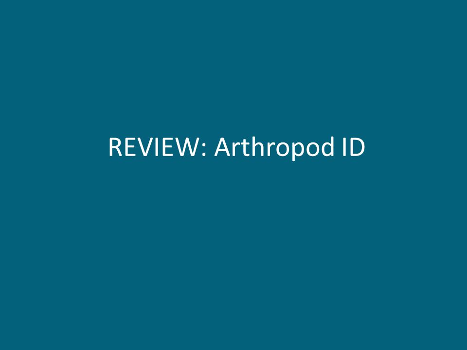 REVIEW: Arthropod ID