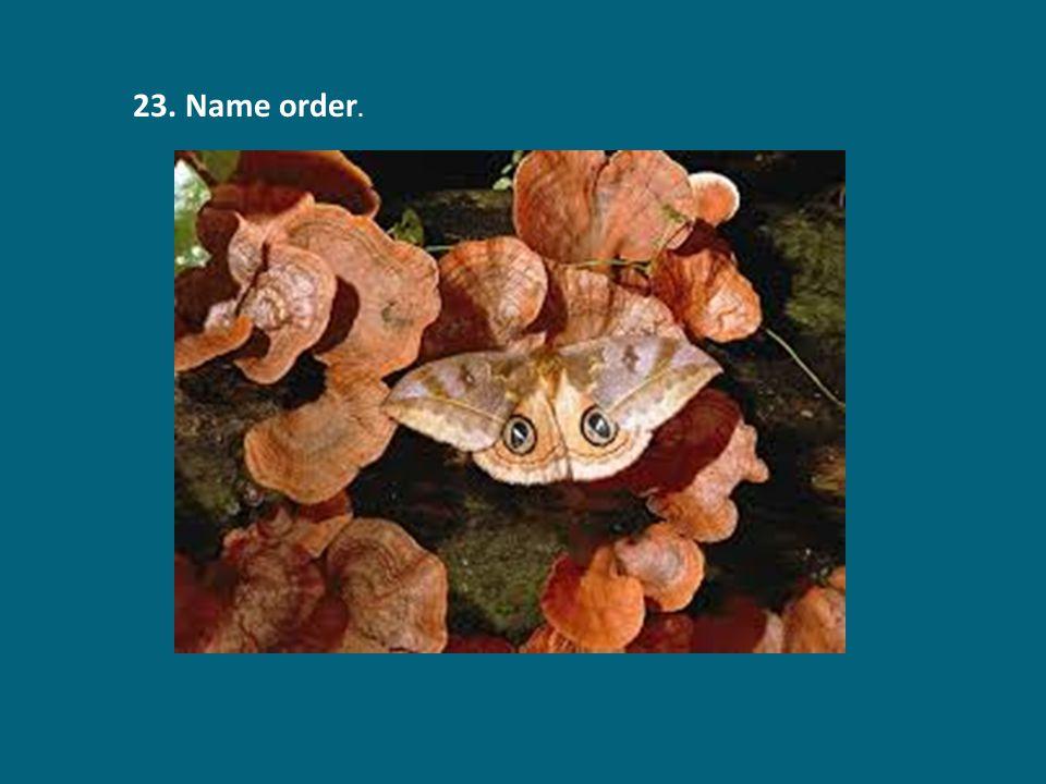 23. Name order.