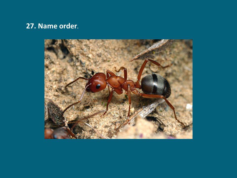 27. Name order.