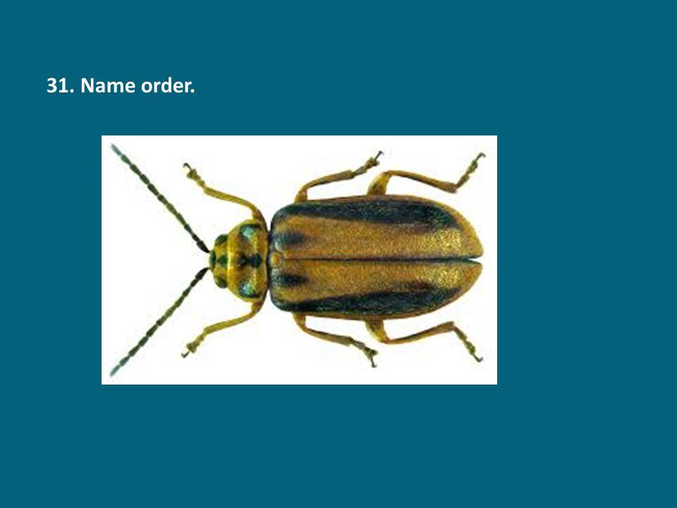 31. Name order.