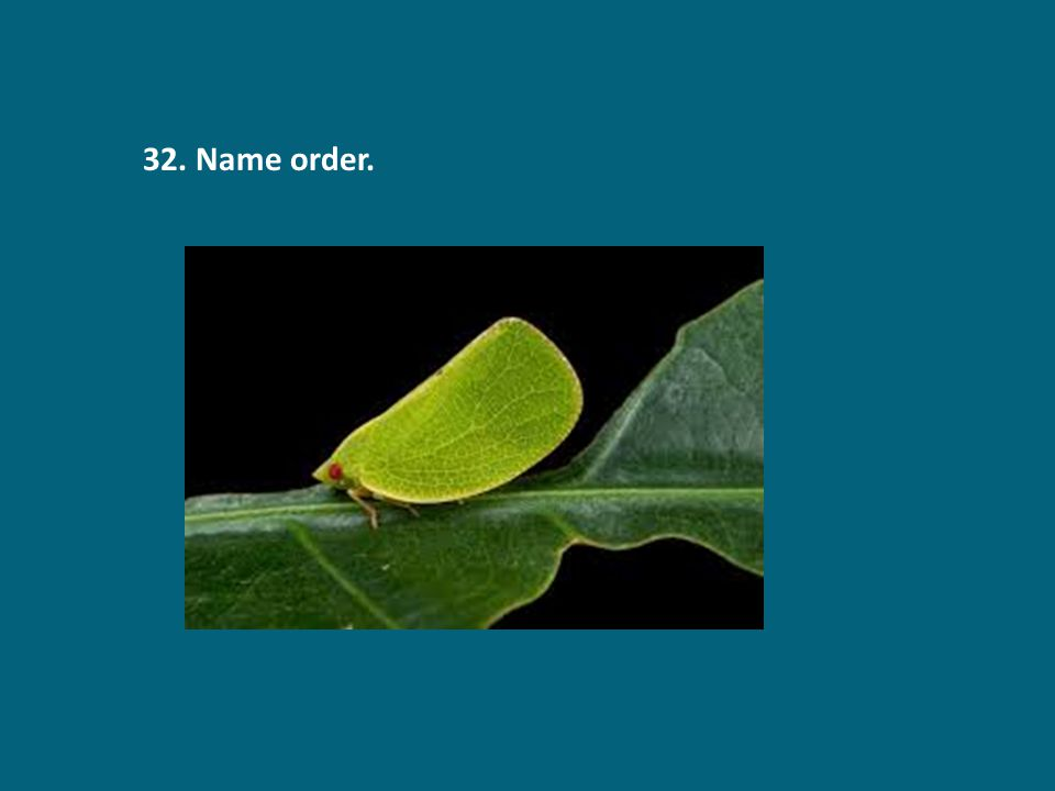 32. Name order.