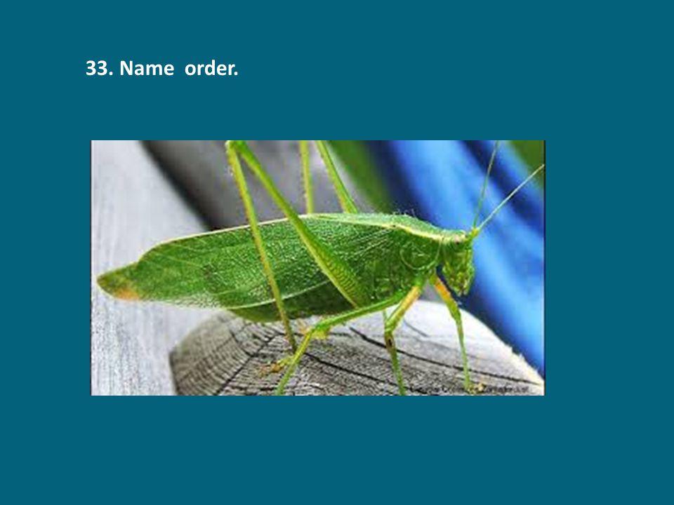 33. Name order.