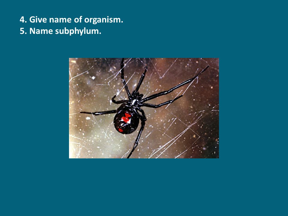 4. Give name of organism. 5. Name subphylum.