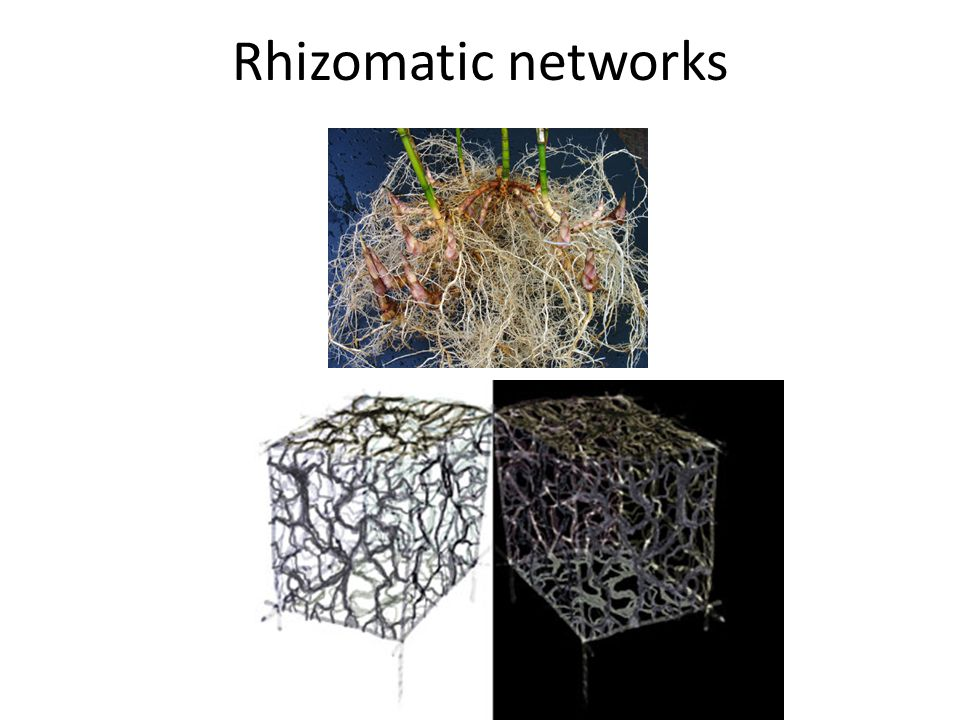 Rhizomatic networks