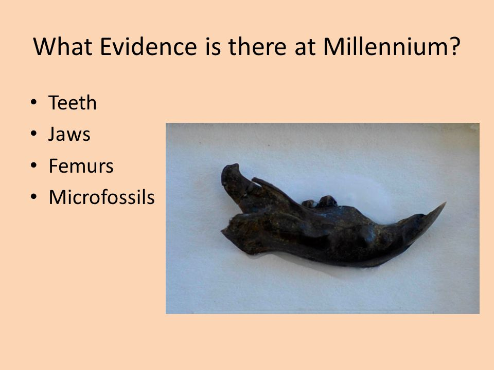 What Evidence is there at Millennium? Teeth Jaws Femurs Microfossils
