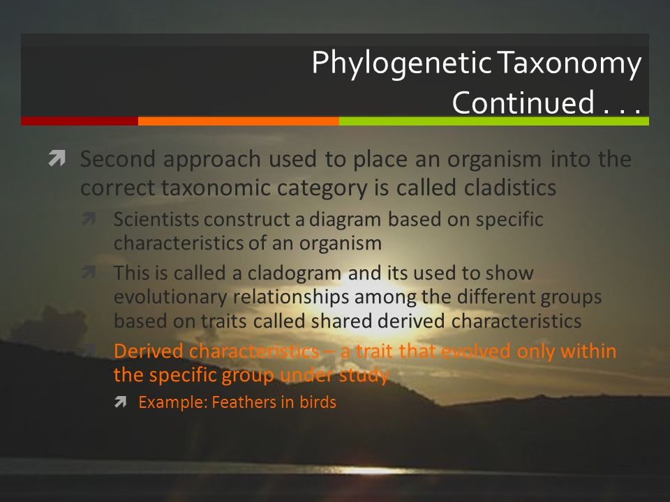 Phylogenetic Taxonomy Continued... Second approach used to place an organism into the correct taxonomic category is called cladistics Scientists const