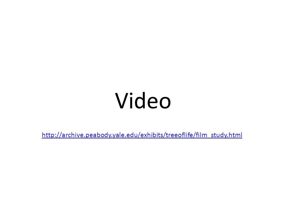 Video http://archive.peabody.yale.edu/exhibits/treeoflife/film_study.html