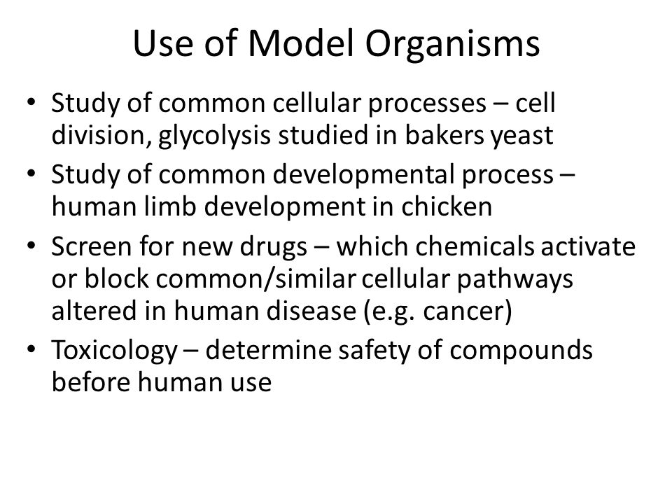 Use of Model Organisms Study of common cellular processes – cell division, glycolysis studied in bakers yeast Study of common developmental process –