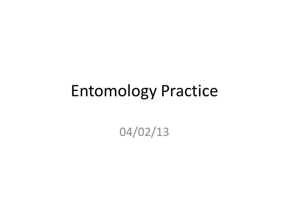 Entomology Practice 04/02/13