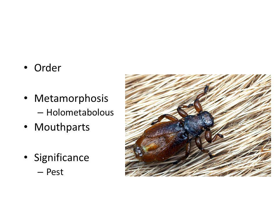 Order Metamorphosis – Holometabolous Mouthparts Significance – Pest
