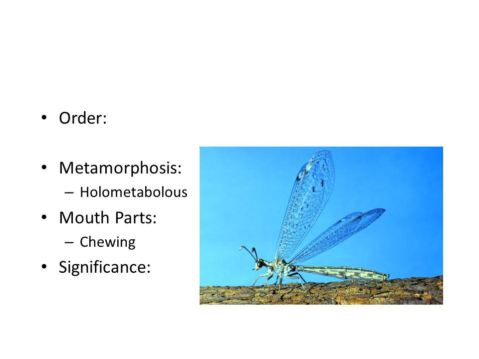 Order: – Hemiptera Metamorphosis: – Hemimetabolous Mouth Parts: Significance: – Beneficial