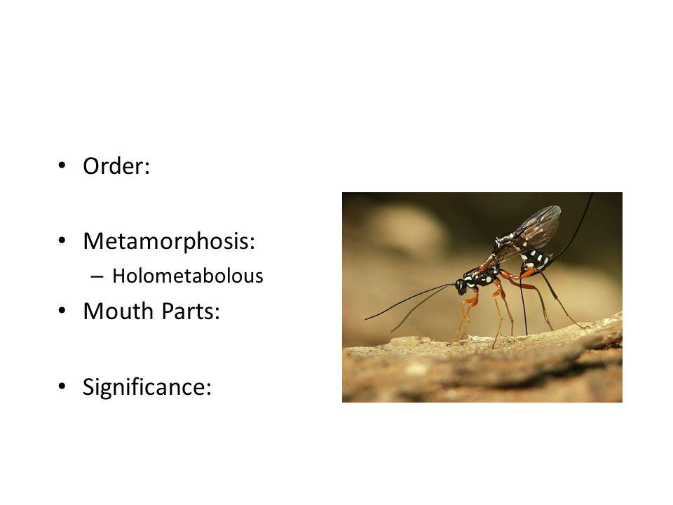 Order: Metamorphosis: – Holometabolous Mouth Parts: Significance:
