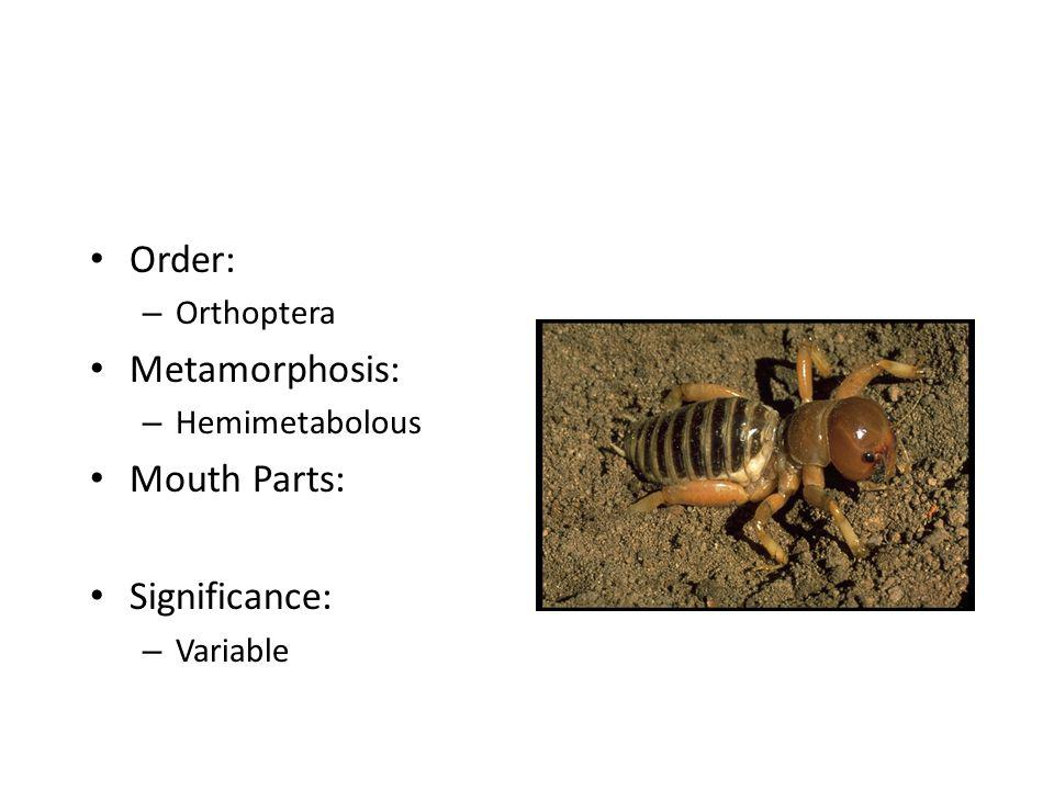 Order: – Orthoptera Metamorphosis: – Hemimetabolous Mouth Parts: Significance: – Variable