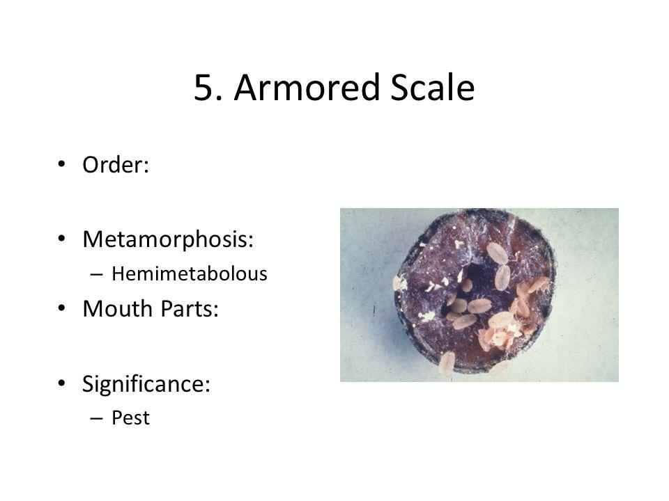 6. Assassin Bug Order: Metamorphosis: – Hemimetabolous Mouth Parts: Significance: