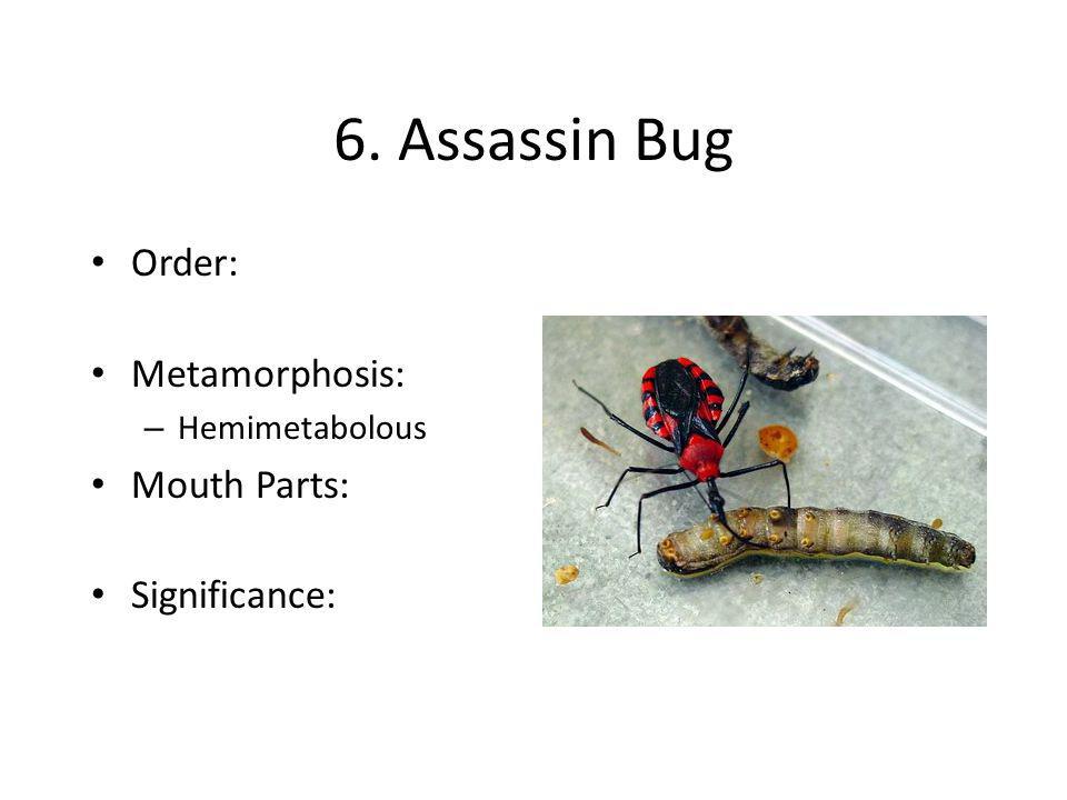 6. Assassin Bug Order: Metamorphosis: – Hemimetabolous Mouth Parts: Significance: