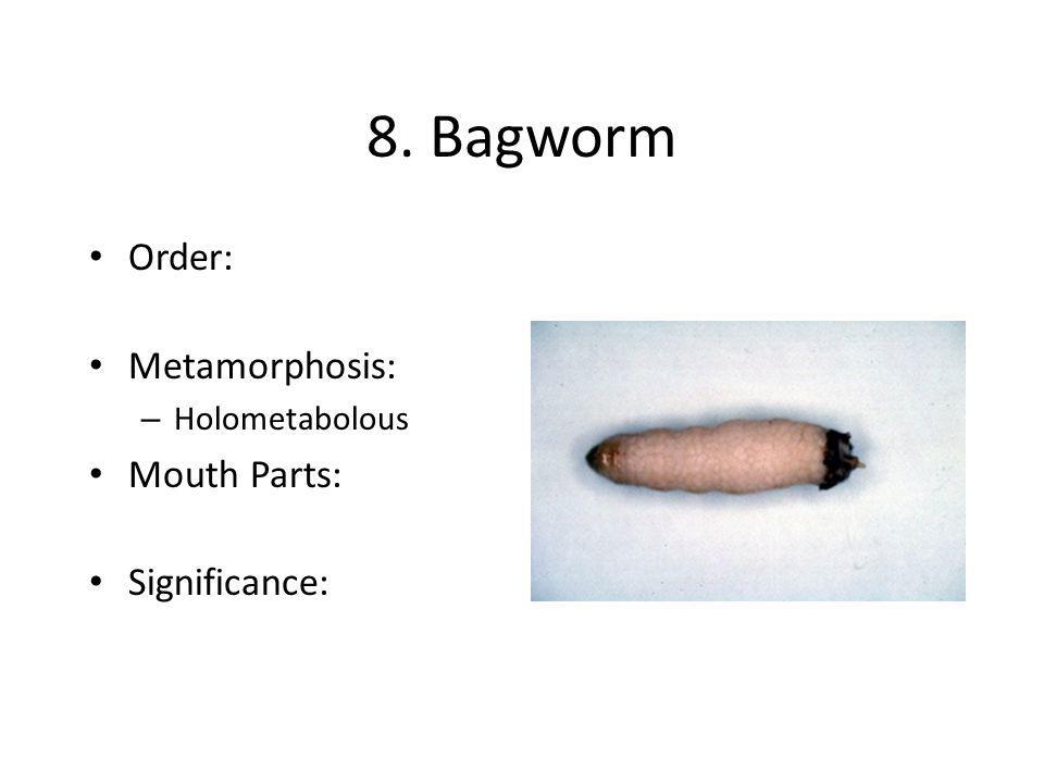 8. Bagworm Order: Metamorphosis: – Holometabolous Mouth Parts: Significance: