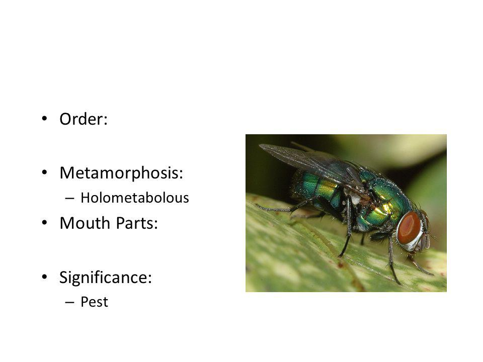 Order: – Orthoptera Metamorphosis: Mouth Parts: Significance: – Variable