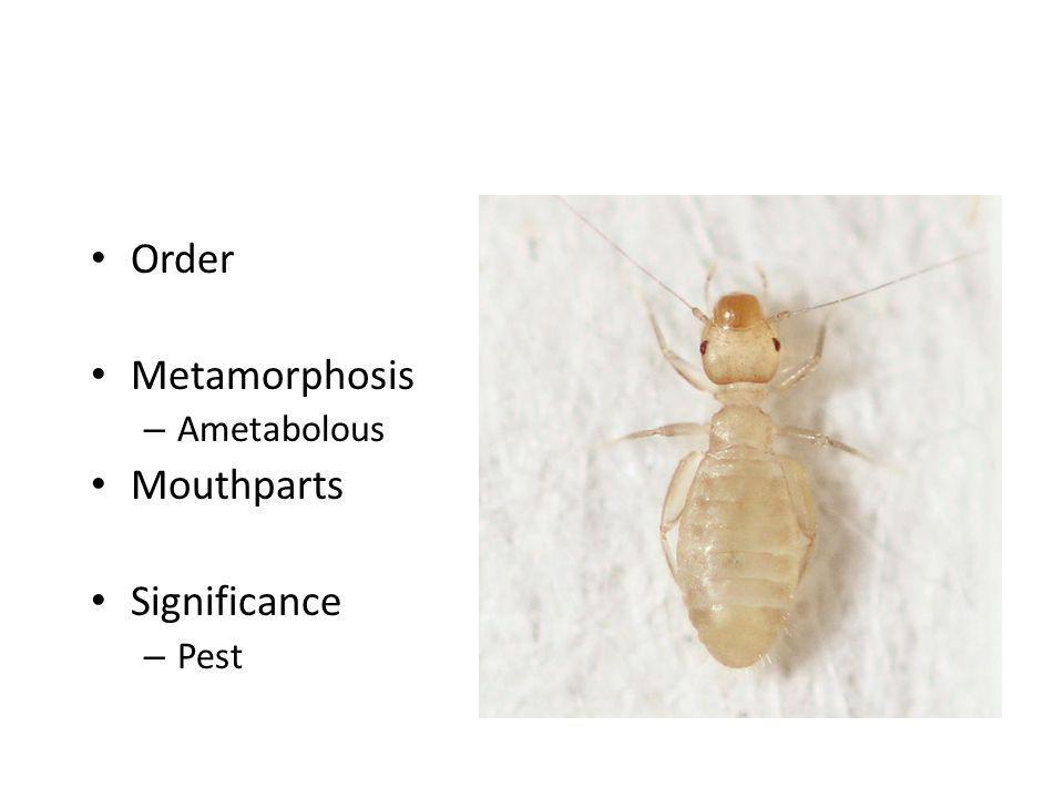 Order Metamorphosis – Ametabolous Mouthparts Significance – Pest