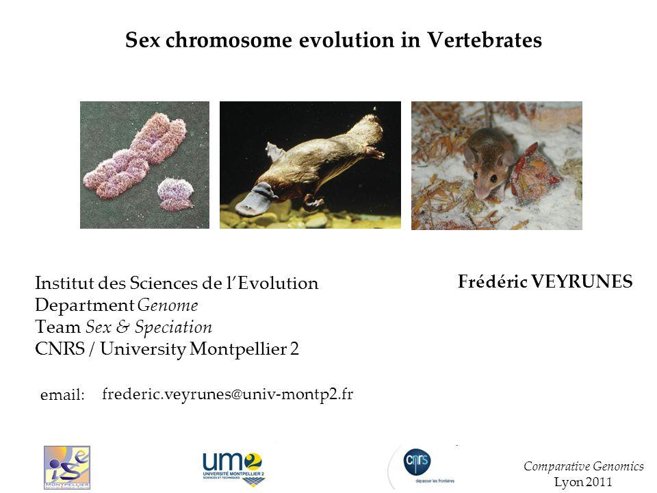I.Origin and Evolution of sex chromosomes in Vertebrates.