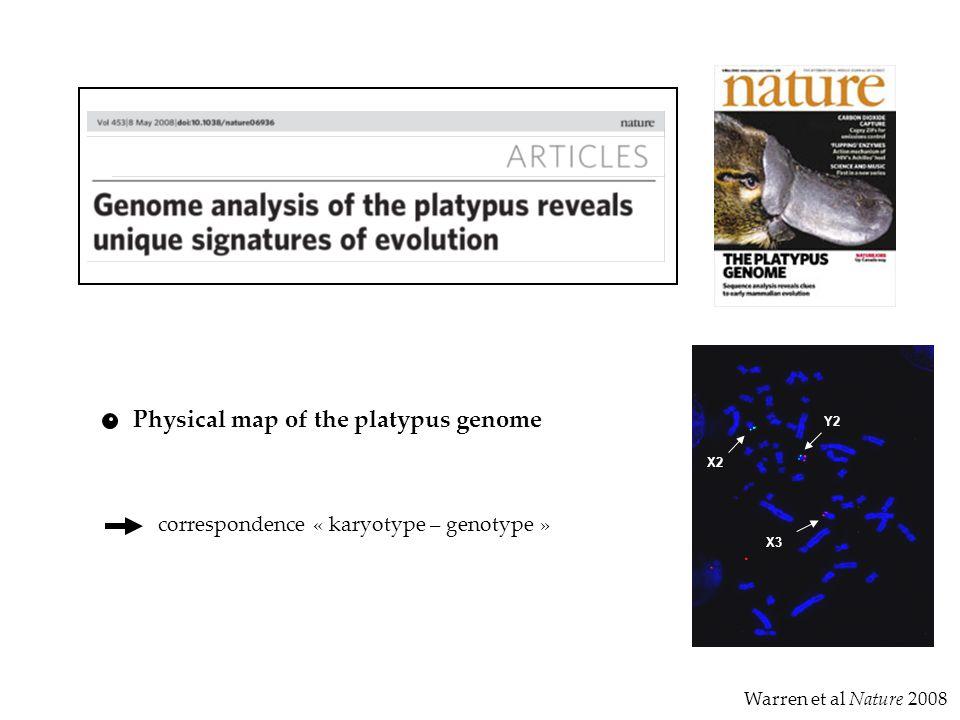 Warren et al Nature 2008 Physical map of the platypus genome correspondence « karyotype – genotype » Y2 X2 X3