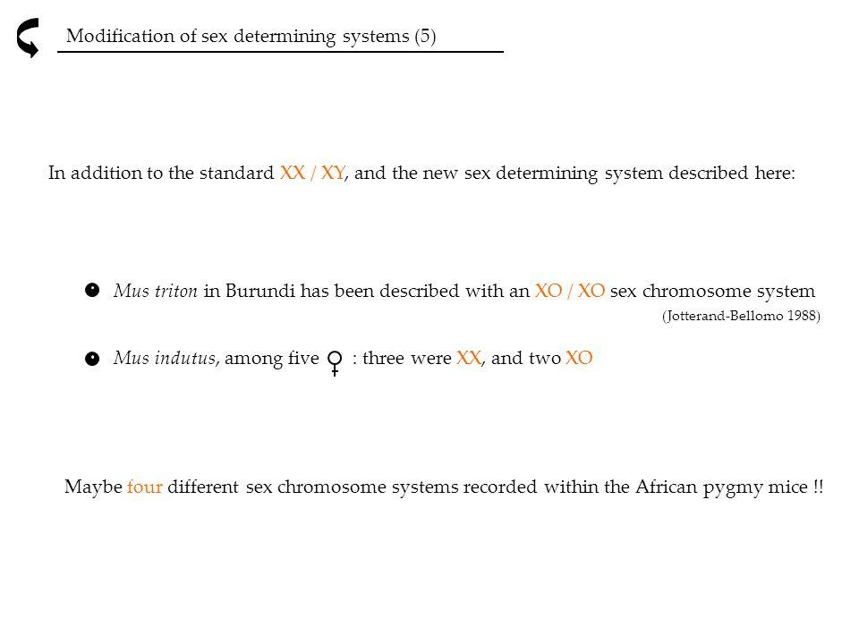 Modification of sex determining systems (5) Mus triton in Burundi has been described with an XO / XO sex chromosome system (Jotterand-Bellomo 1988) Mu