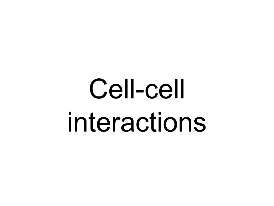 Cell-cell interactions