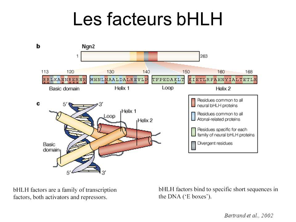 Les facteurs bHLH Bertrand et al., 2002