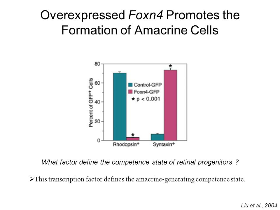 Overexpressed Foxn4 Promotes the Formation of Amacrine Cells Liu et al., 2004 What factor define the competence state of retinal progenitors ? Ø This