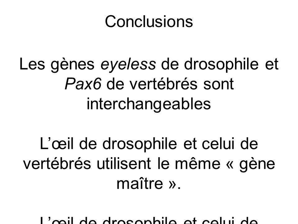 Les gènes eyeless de drosophile et Pax6 de vertébrés sont interchangeables Lœil de drosophile et celui de vertébrés utilisent le même « gène maître ».