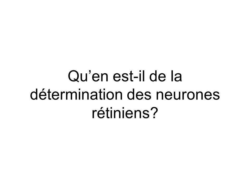 Quen est-il de la détermination des neurones rétiniens?