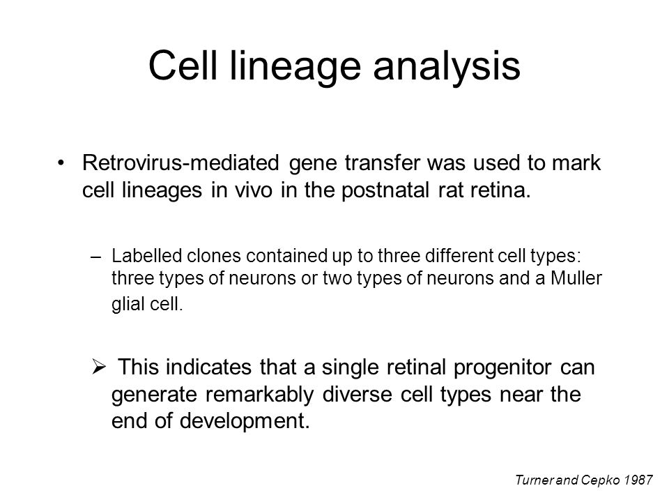Cell lineage analysis Retrovirus-mediated gene transfer was used to mark cell lineages in vivo in the postnatal rat retina.