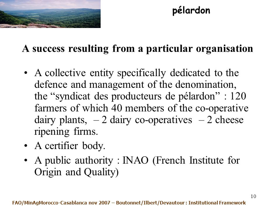10 A success resulting from a particular organisation A collective entity specifically dedicated to the defence and management of the denomination, the syndicat des producteurs de pélardon : 120 farmers of which 40 members of the co-operative dairy plants, – 2 dairy co-operatives – 2 cheese ripening firms.