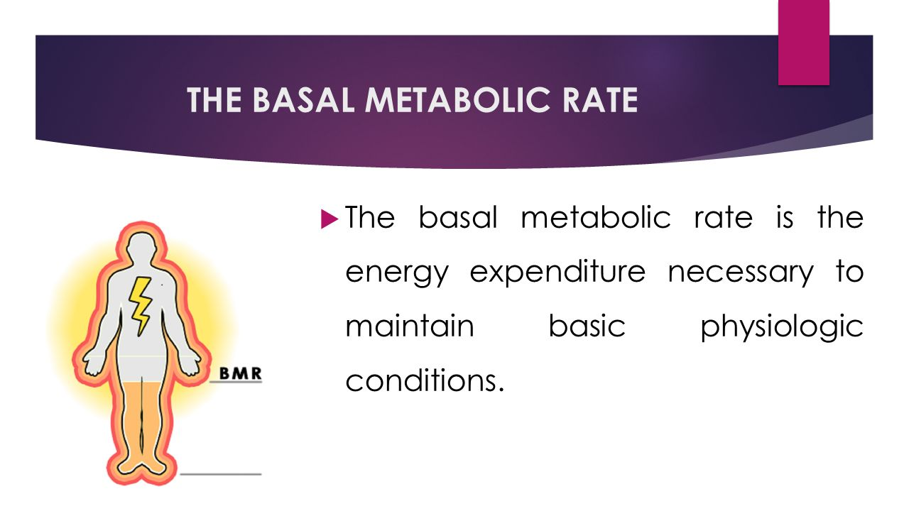 THE BASAL METABOLIC RATE  The basal metabolic rate is the energy expenditure necessary to maintain basic physiologic conditions.