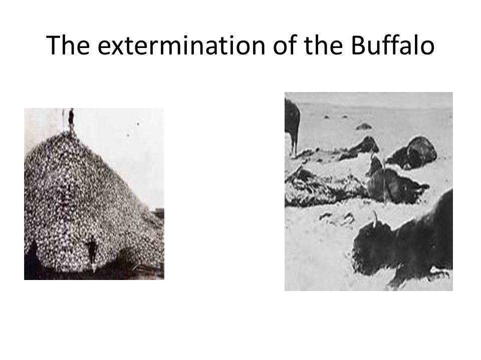 The extermination of the Buffalo