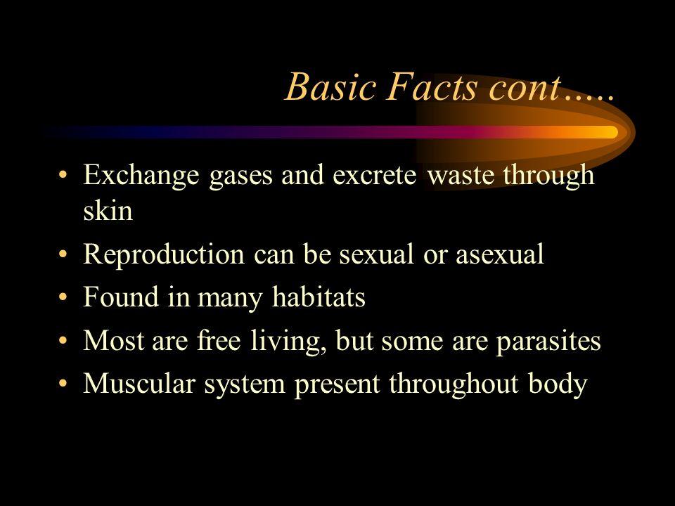 phylum nematoda. basic facts name meaning: round worm invertebrate, Muscles