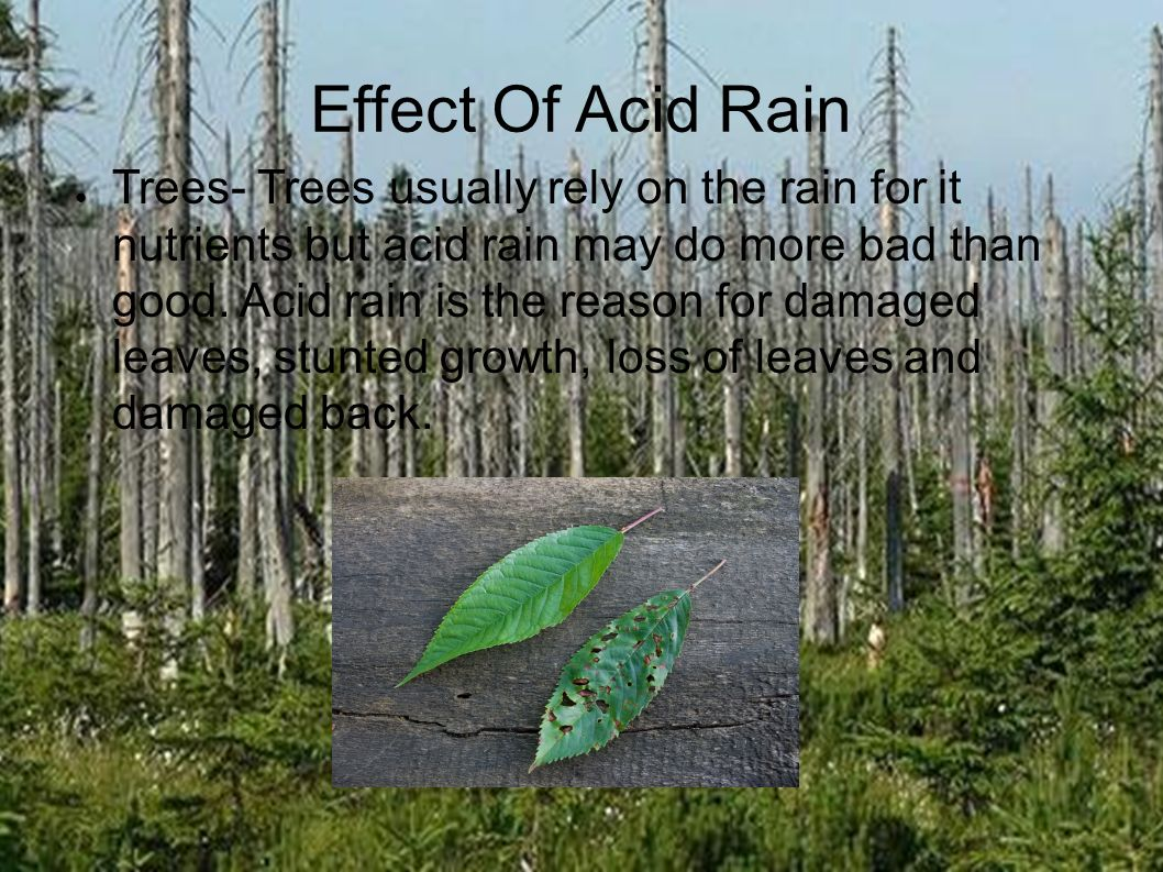 an analysis of acid rain in trees Acid rain analysis also occur when trees absorb soil that has come into contact with acid rain the soil poisons the tree with toxic substances that the rain has.