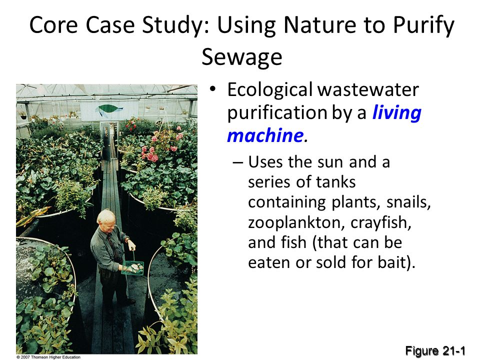 Core Case Study: Using Nature to Purify Sewage Ecological wastewater purification by a living machine.
