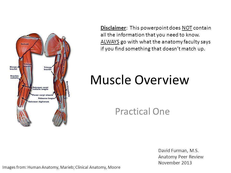 Hermosa Anatomy And Physiology Of Eye Khurana 3rd Edition Bandera ...