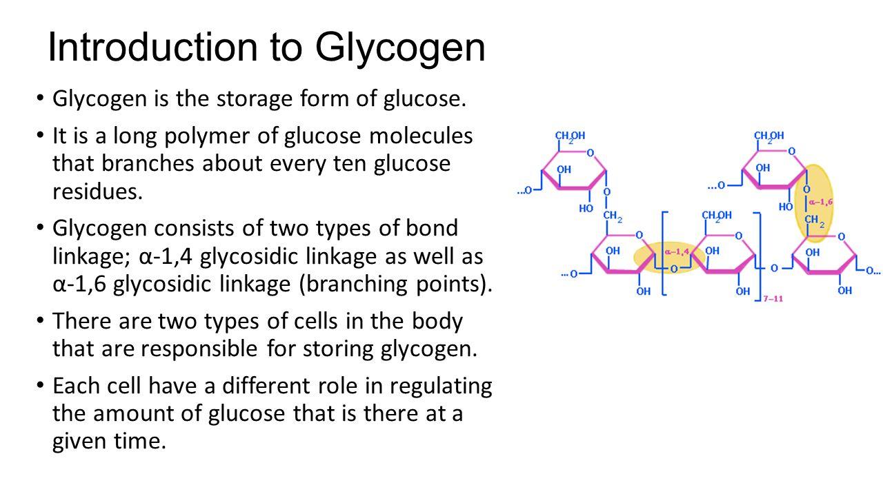 Glycogen Metabolism, Electron Transport/Oxidative Phosphorylation ...