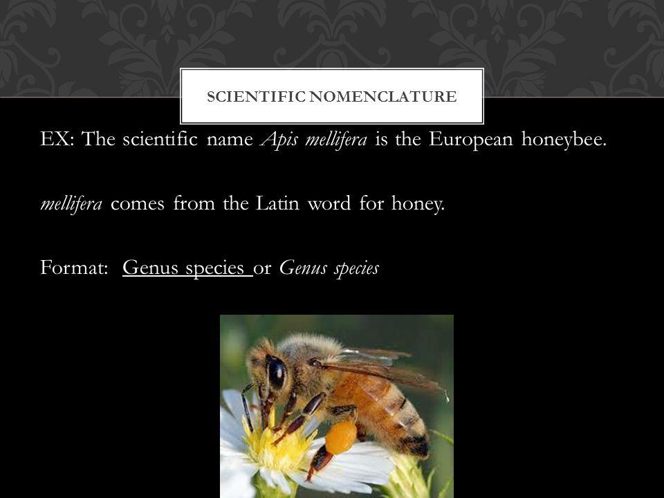 SCIENTIFIC NOMENCLATURE EX: The scientific name Apis mellifera is the European honeybee.