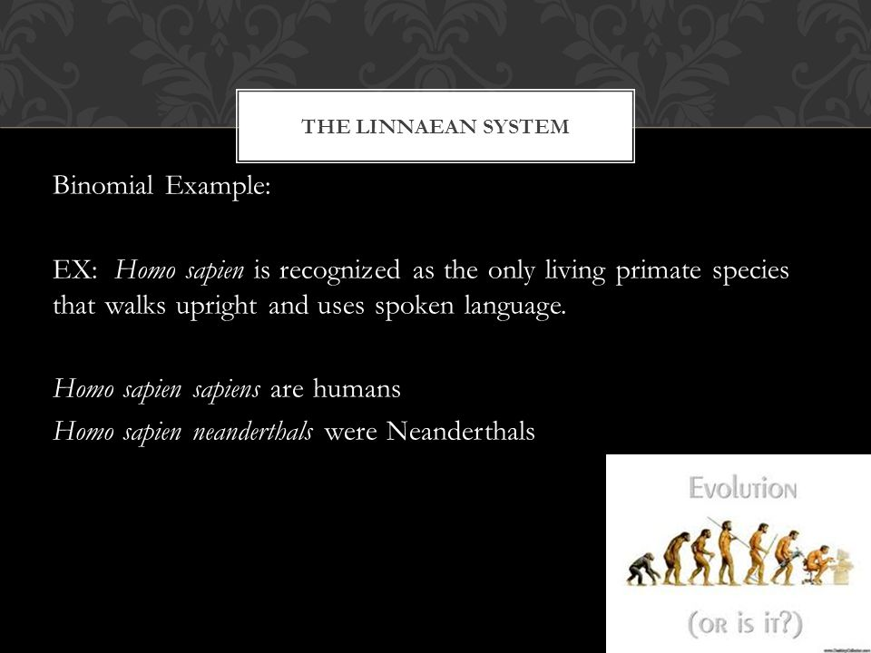 THE LINNAEAN SYSTEM Binomial Example: EX: Homo sapien is recognized as the only living primate species that walks upright and uses spoken language.