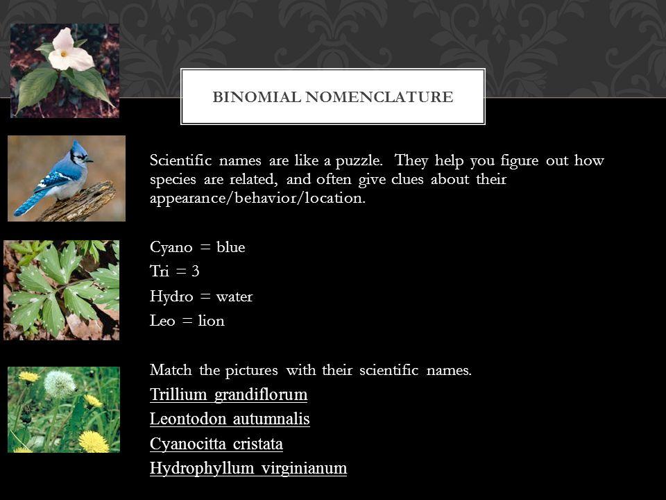 Scientific names are like a puzzle.